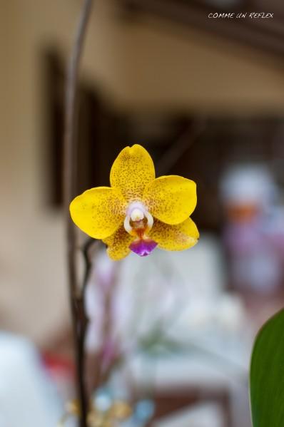 Feuilles-et-fleurs 0023