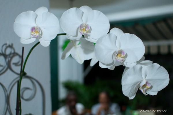 Feuilles-et-fleurs 0042