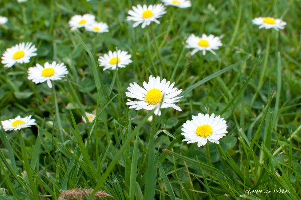 Feuilles-et-fleurs 0091