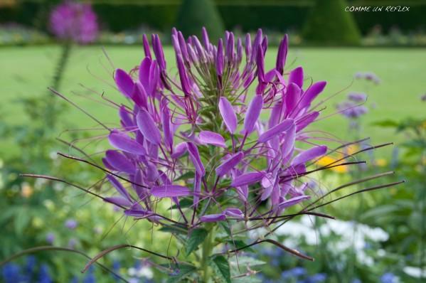 Feuilles-et-fleurs 0339