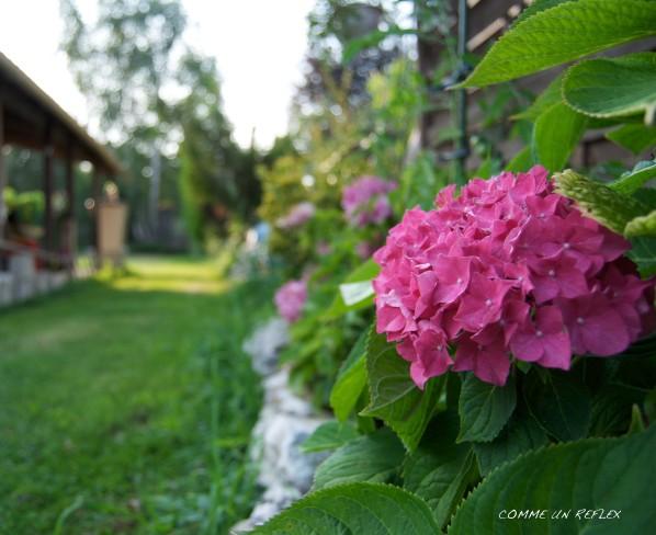 Feuilles-et-fleurs 0832