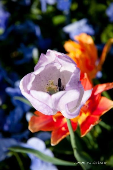 Instant-fleuri 1337