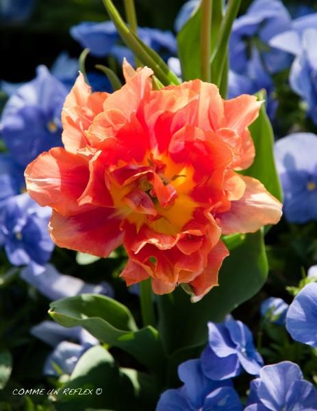 Instant-fleuri 1374