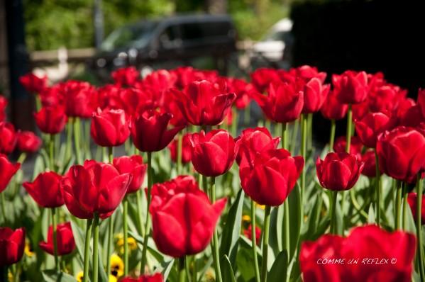 Instant-fleuri 1431