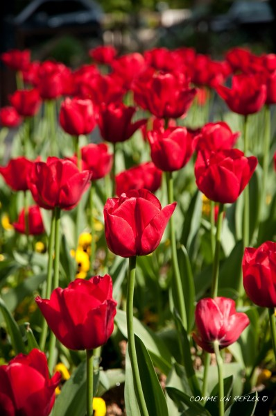 Instant-fleuri 1433