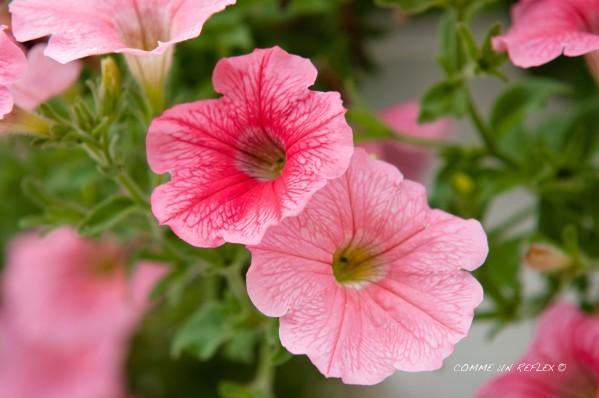 Instant-fleuri 5597