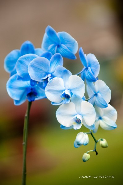 Instant-fleuri 5617