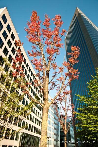 Un brin de nature à La Défense.Photo-Pele-Mele 4738