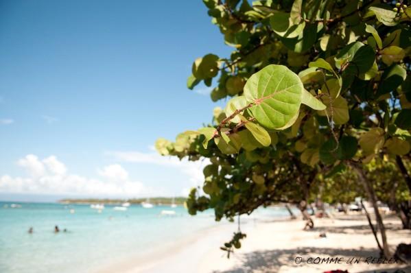 Quelques belles fleurs de la Guadeloupe à découvrir,Vegetaux--Guadeloupe- 0753