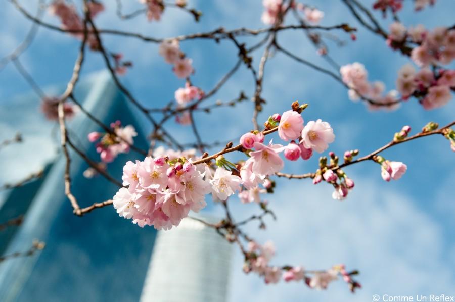 scenery spring pictures photos printemps libre de droit. Black Bedroom Furniture Sets. Home Design Ideas